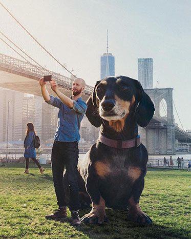 vivian giant wiener dog