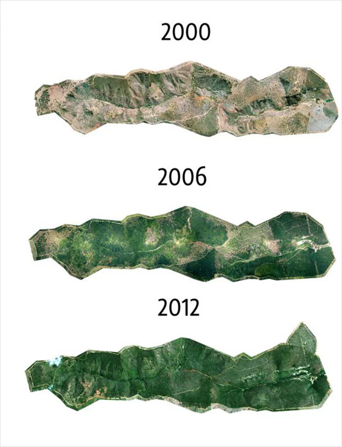 brazil forest 2000 to 2012