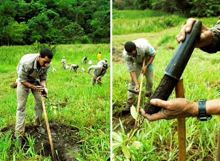 brazil forest restoration