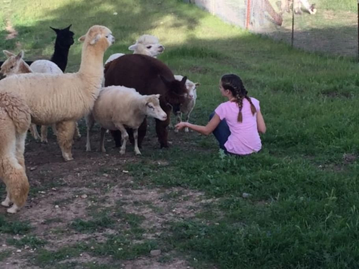 capaldi alpaca ranch