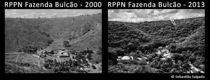 fazenda bulcao forest restoration