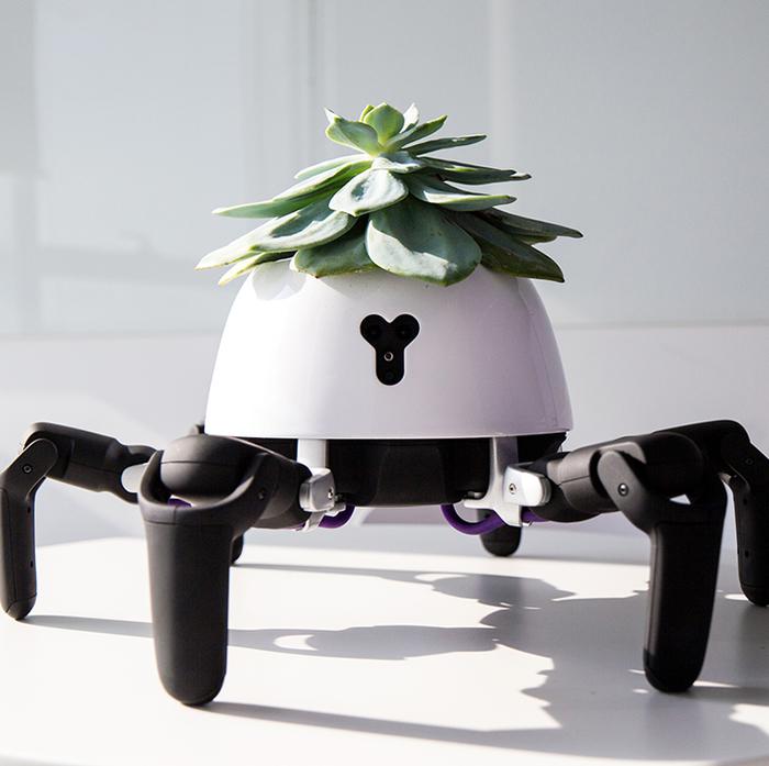 hexa robot gardener