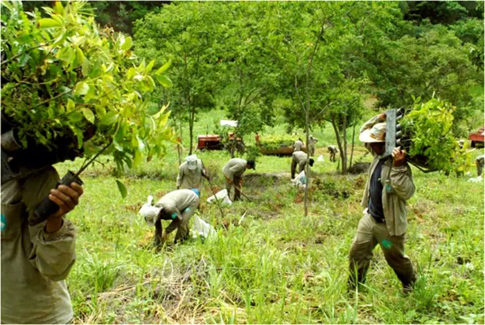 instituto terra plant 2 million trees