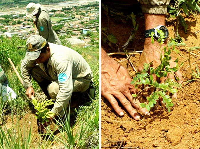 instituto terra plant 4 million saplings