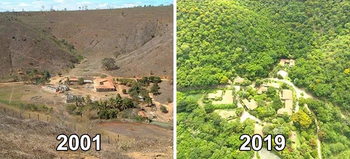 reforestation before and after