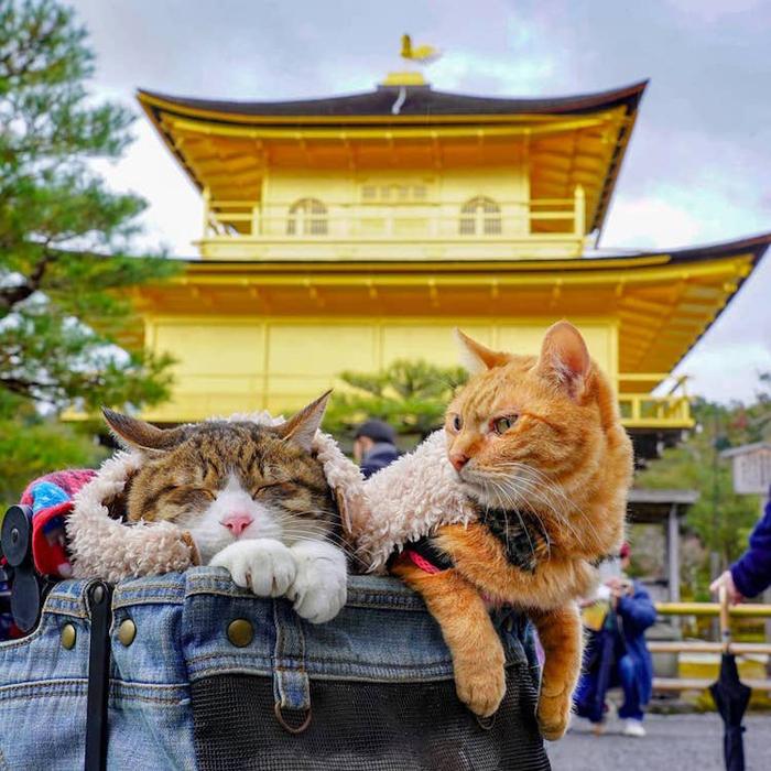 dobrodružné mačky japonské chrámy