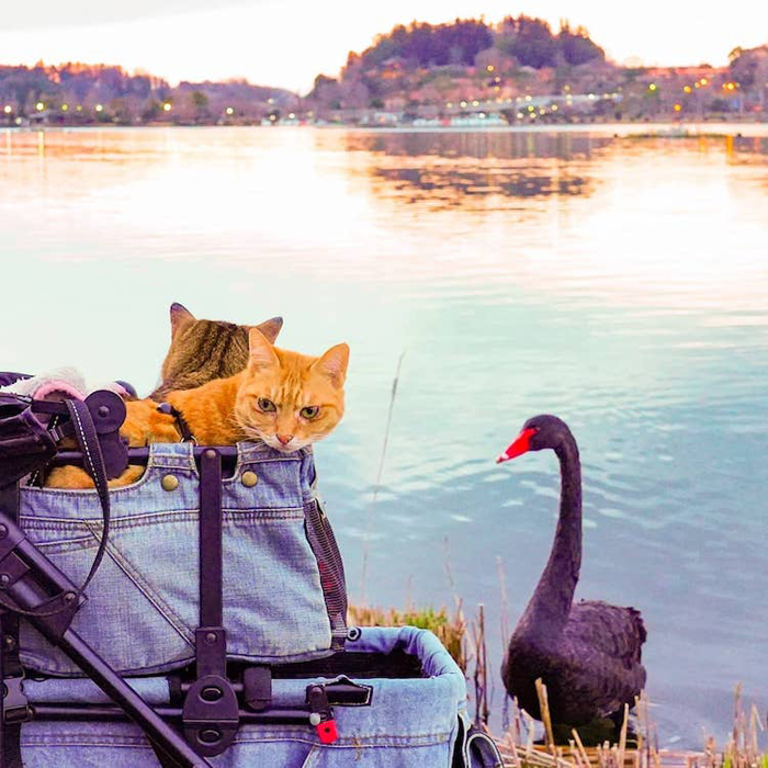 adventurous cats lake