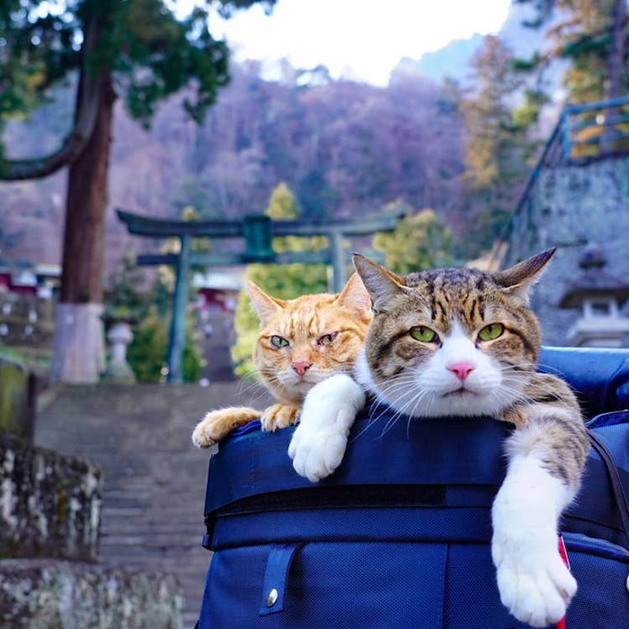 adventurous cats on backpack