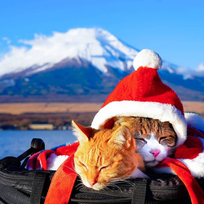 adventurous cats santa hat