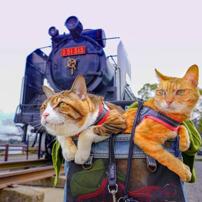 adventurous cats train