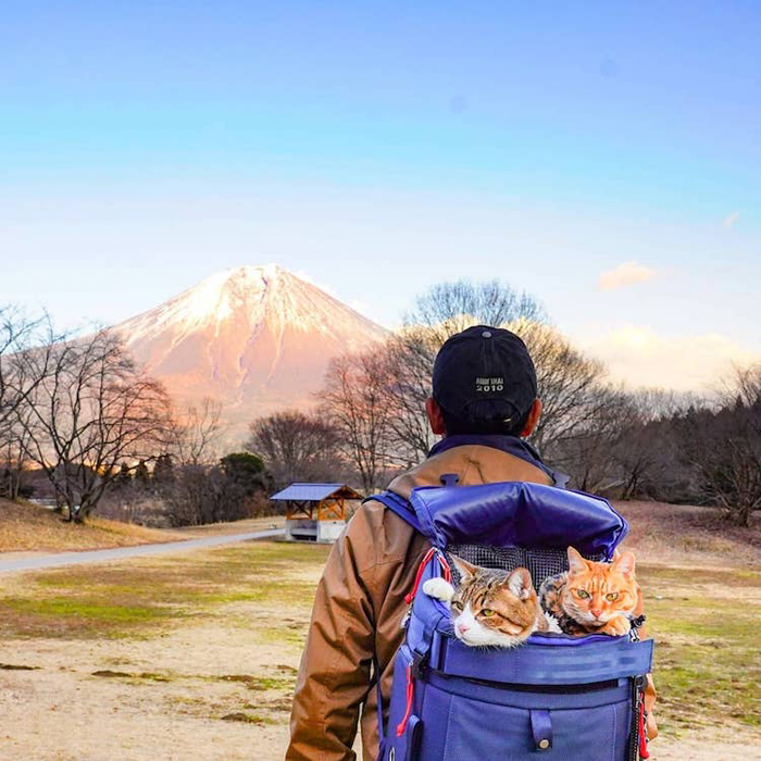 adventurous cats visit mt fuji