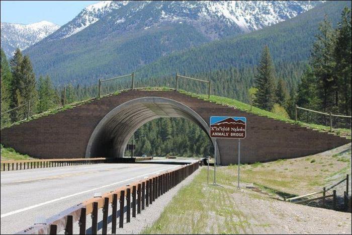 animal bridge montana