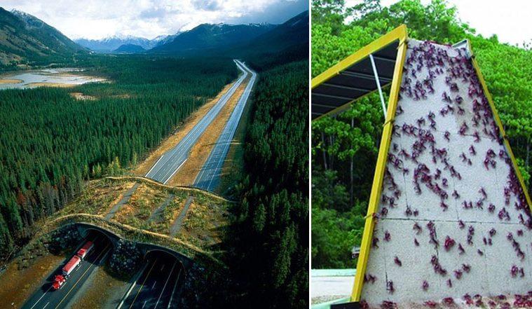 animal bridges