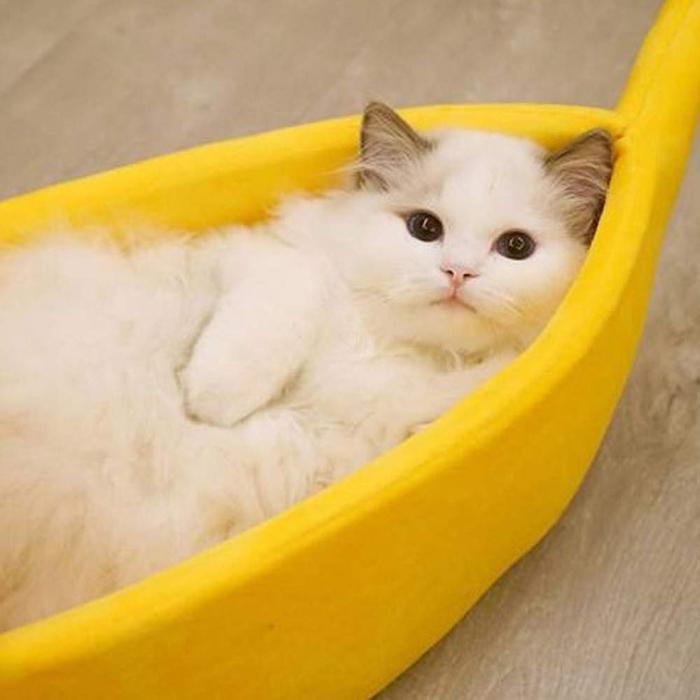 banana cat bed cozy