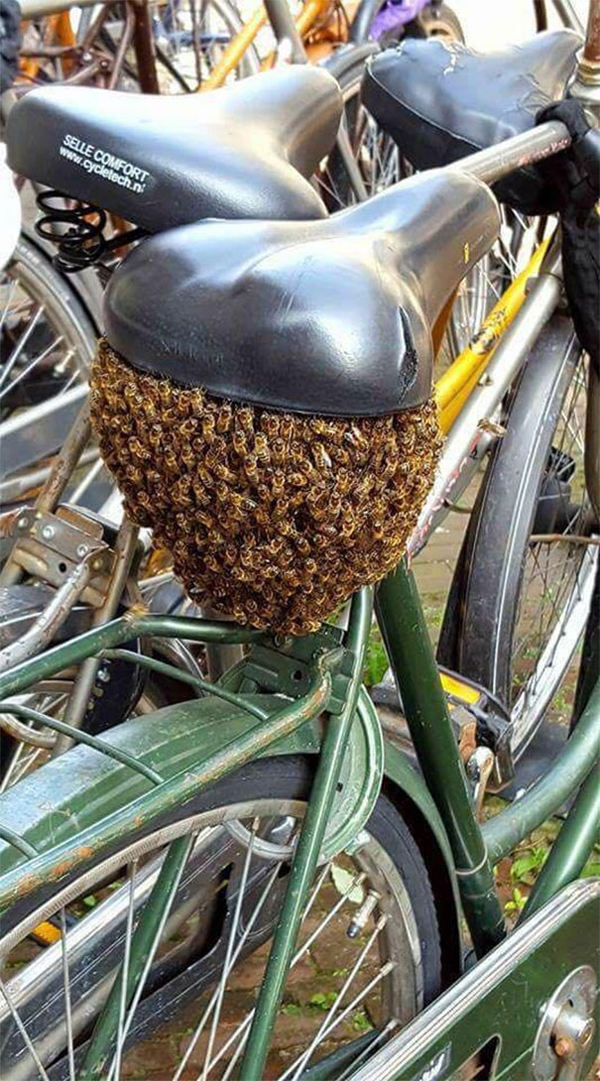 bees bicycle scariest creatures