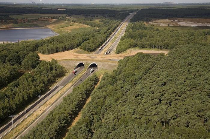 bridges for animals belgium