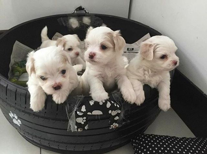caominhas pets beds for puppies
