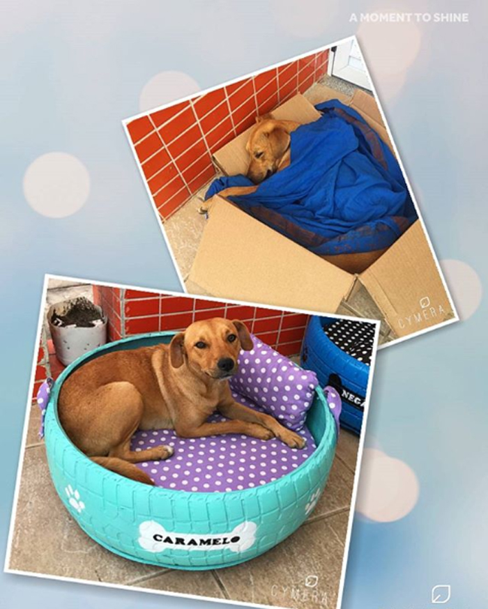 caominhas pets beds for stray dogs