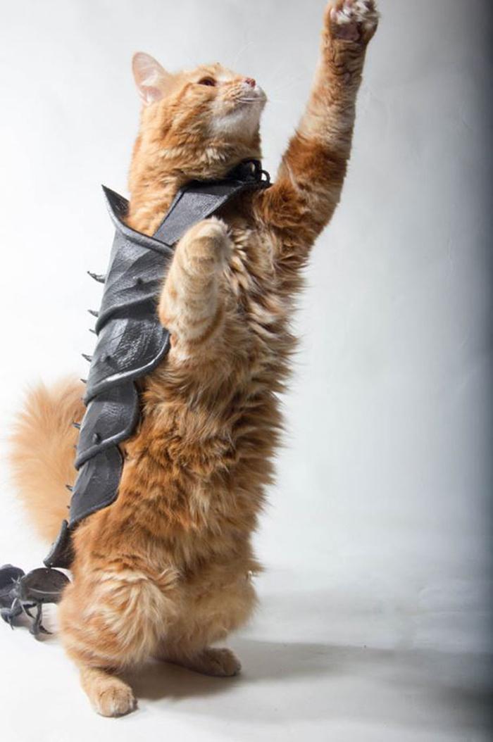 cat 3d printed armor jwall
