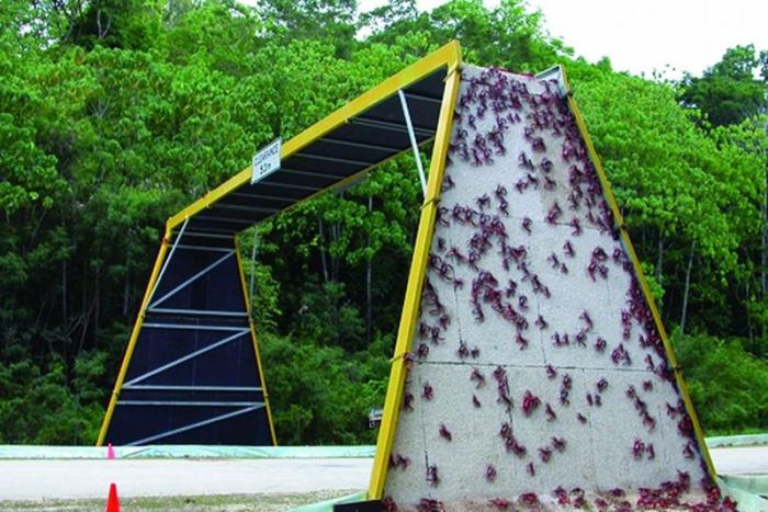 christmas island australia red crabs crossing bridge