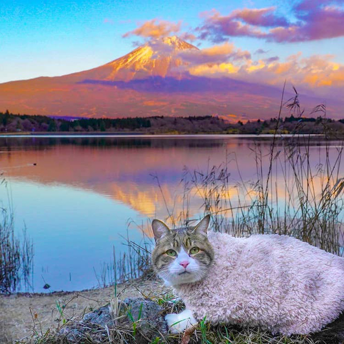 daikichi cat mt fuji
