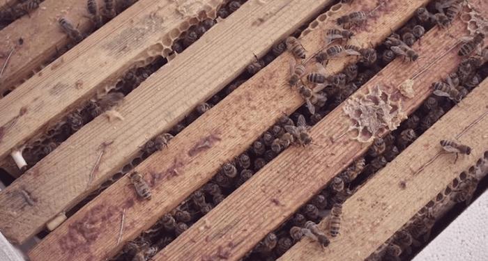 mcdonalds mchive bees restaurant 6