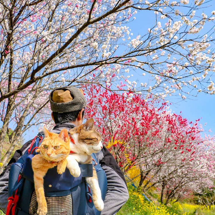 nagasawa rescue cats travel companions