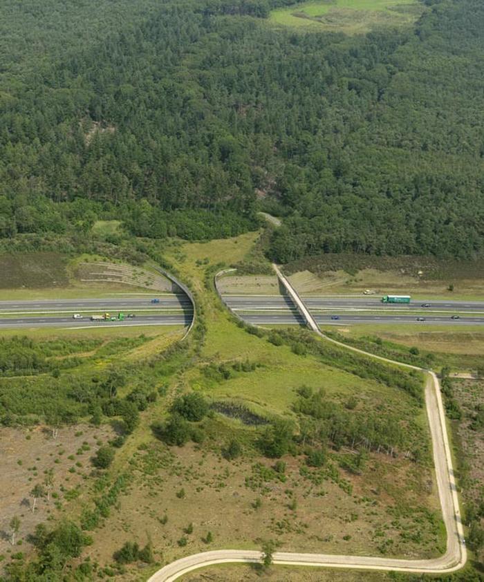 netherlands animal bridges