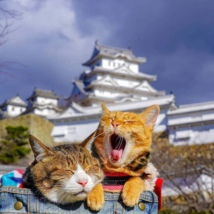 traveling cats japan temples