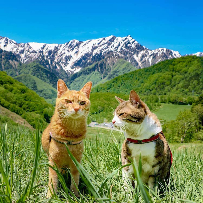 two adventurous cats travel japan