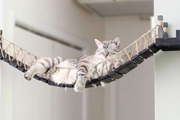 wall furniture for cats