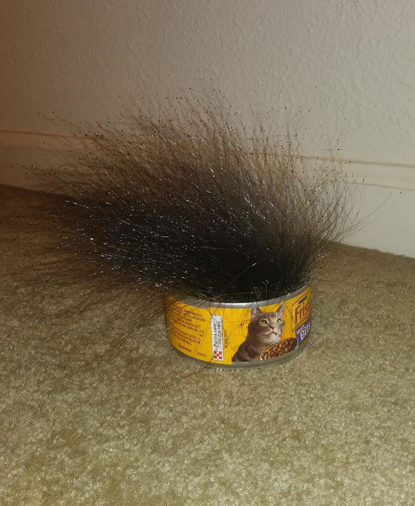 weird mold on cat food scariest creatures