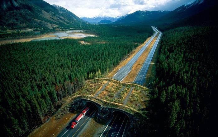 wildlife crossings banff national park alberta