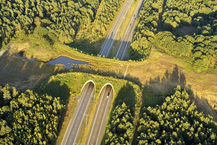 wildlife crossings netherlands
