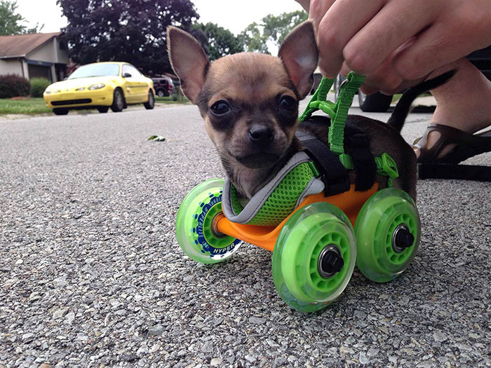 3d printing brilliant creations dog walker