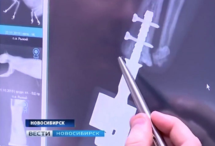 4 bionic paws for frosbite victim cat in russia