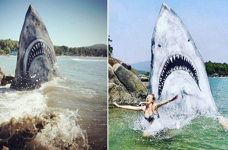 Jimmy Swift great white shark rock