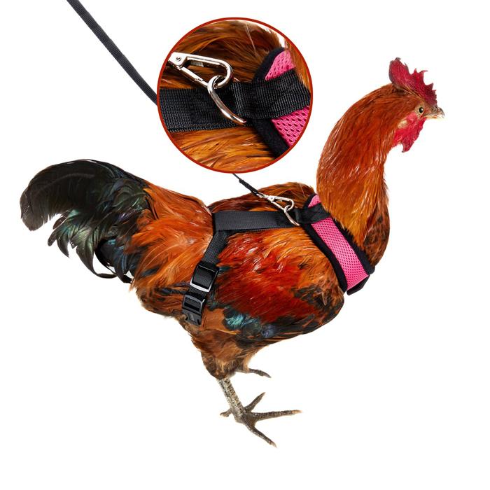 amazon chicken harness leash