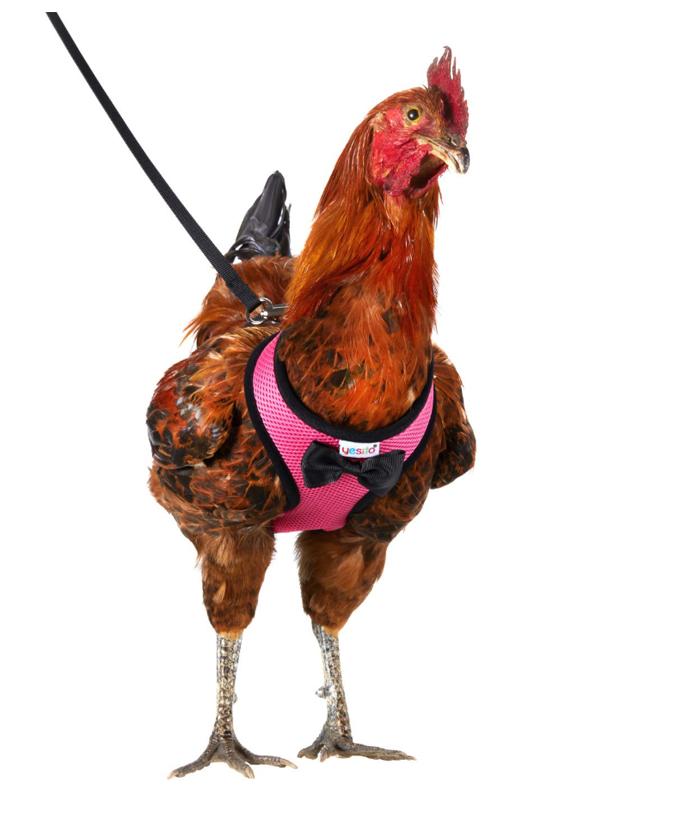 amazon chicken harness pink