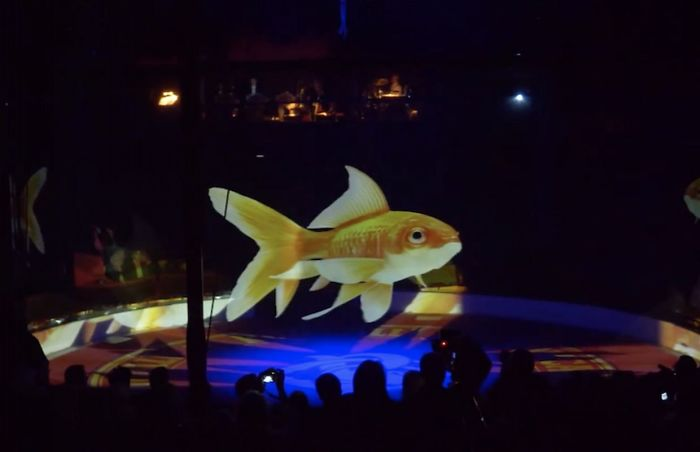 animal holograms fish show circus
