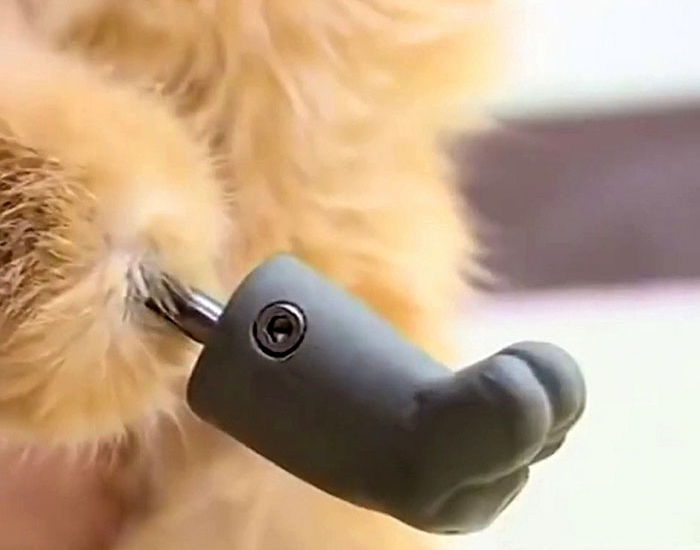 artificial bionic paw for ryzhik the cat close up
