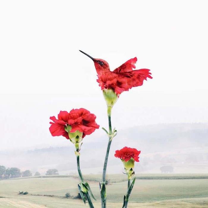 bird flower petals surrealism photography luisa azevedo