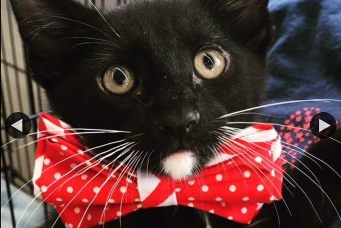 black cat with red bow tie