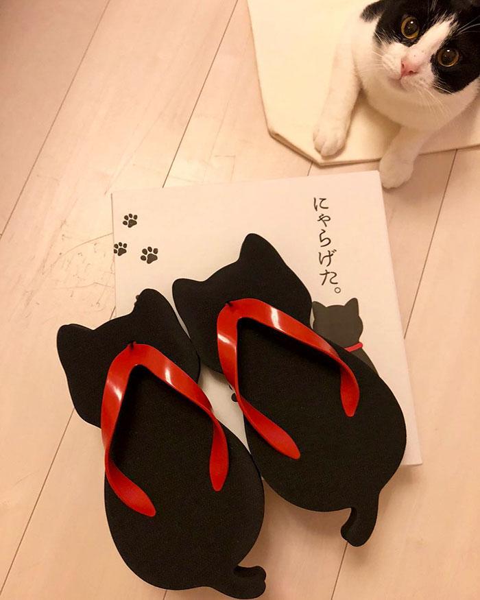 cat-shaped sandals japan