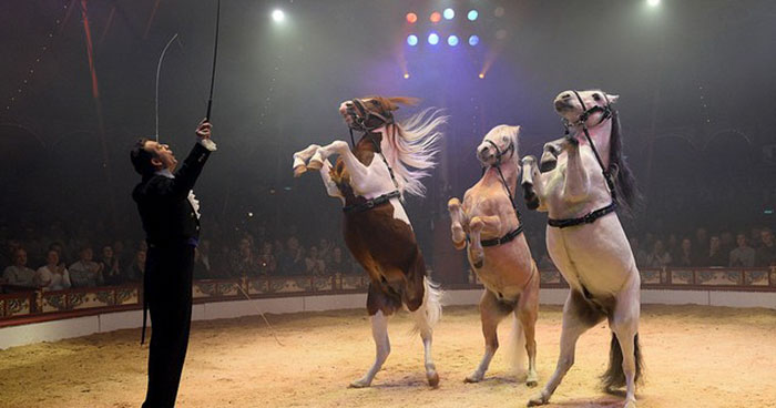 circus animal cruelty