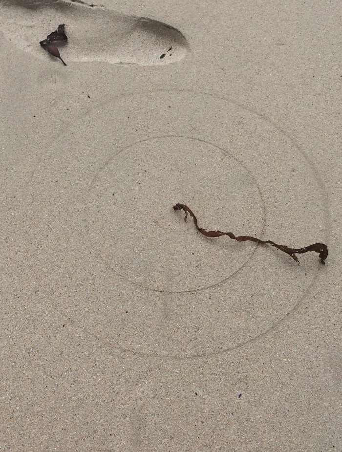 concentric circles by a seaweed - interesting beach things