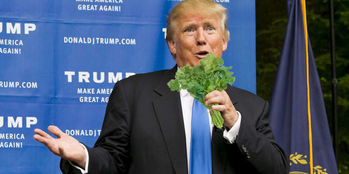 coriander haters funny memes donald trump