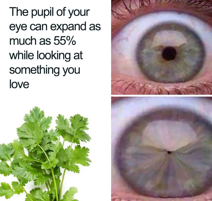 coriander haters funny memes eye pupil