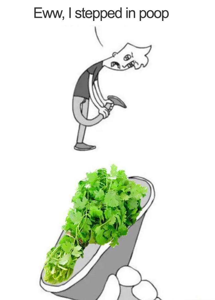 coriander haters funny memes poop