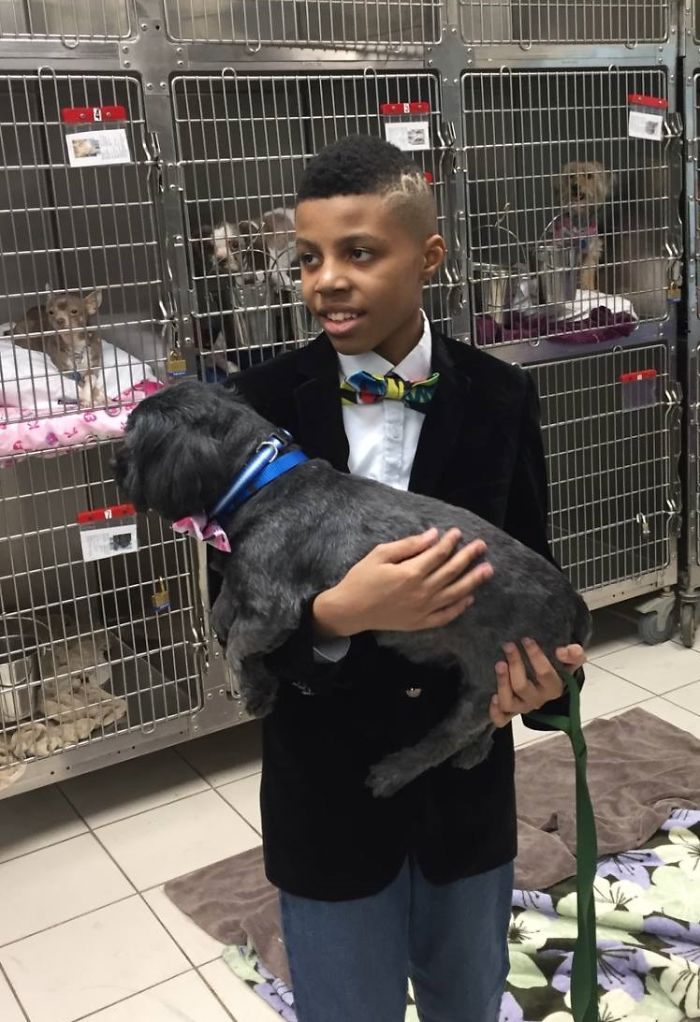 darius brown stylish bow ties for dogs